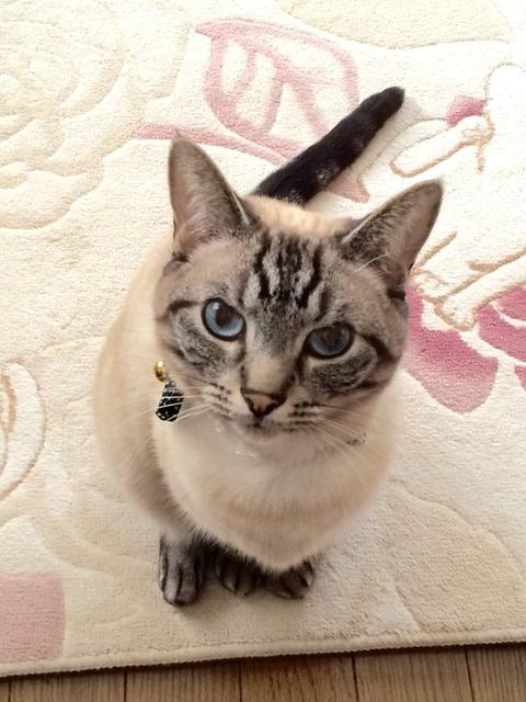 猫 画像 壁紙 待ち受け その24 30枚 25枚目