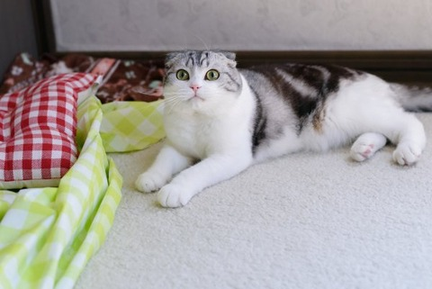 猫 画像 壁紙 待ち受け その24 30枚 3枚目