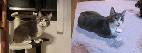猫 画像 壁紙 待ち受け その24 30枚 21枚目