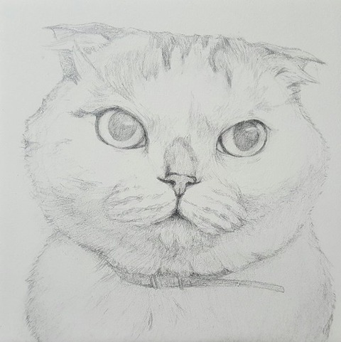 猫 画像 壁紙 待ち受け その24 30枚 5枚目