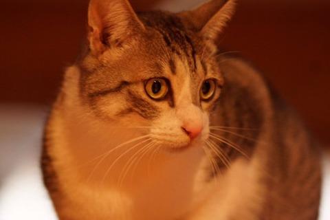 猫 画像 壁紙 待ち受け その22 30枚 26枚目