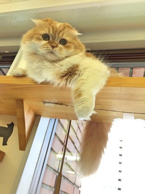 猫 画像 壁紙 待ち受け その22 30枚 28枚目