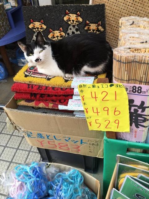 猫 画像 壁紙 待ち受け その25 30枚 28枚目