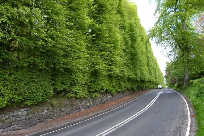 meikleour-beech-hedges-1_thumb[2]