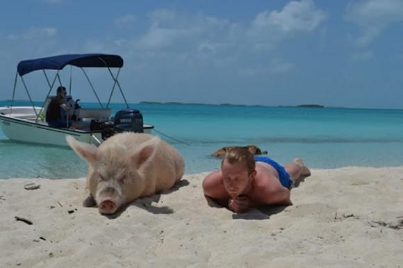 bay_of_pigs_5-580x386 南の楽園バハマには「pig beach」と呼ばれる変