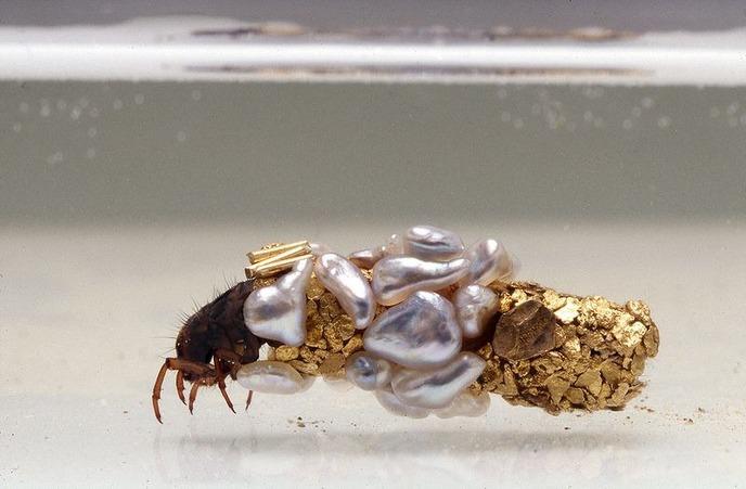hubert-duprat-caddisfly-larvae-36