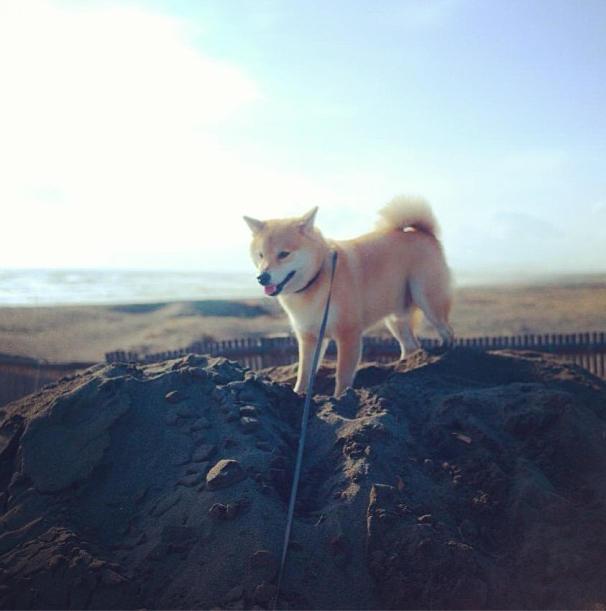 浜辺で遊ぶまるちゃん。