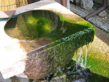 藻 (3)
