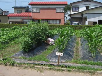 枝豆 (3)