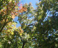 プロフィール画像11守破離200×165GIF山の木