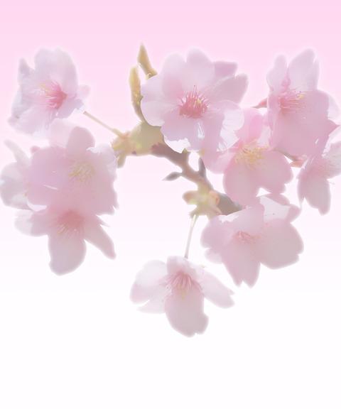 春よこい遺影素材フリー