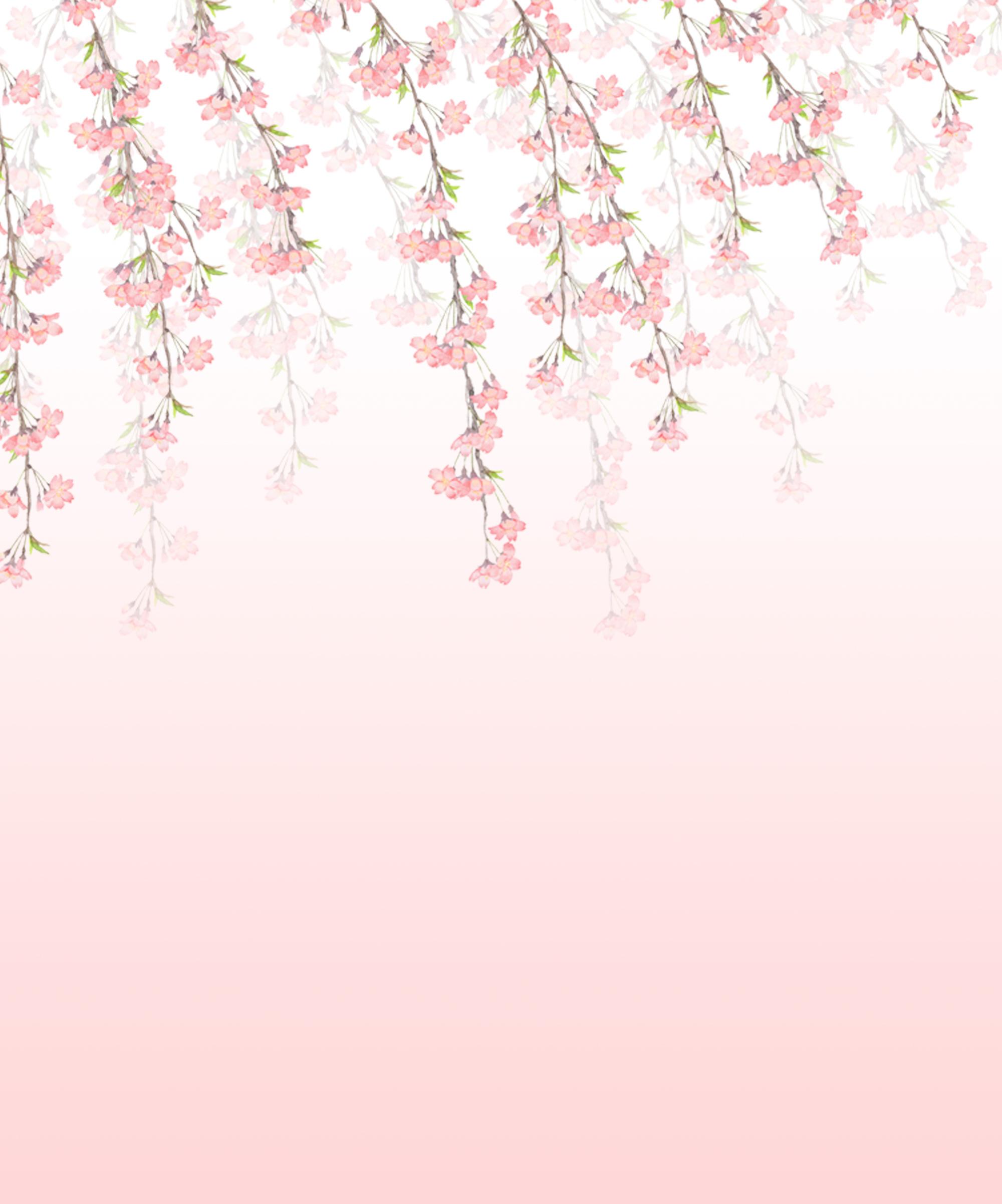 遺影背景素材フリー しだれ桜イラスト : 遺影素材屋