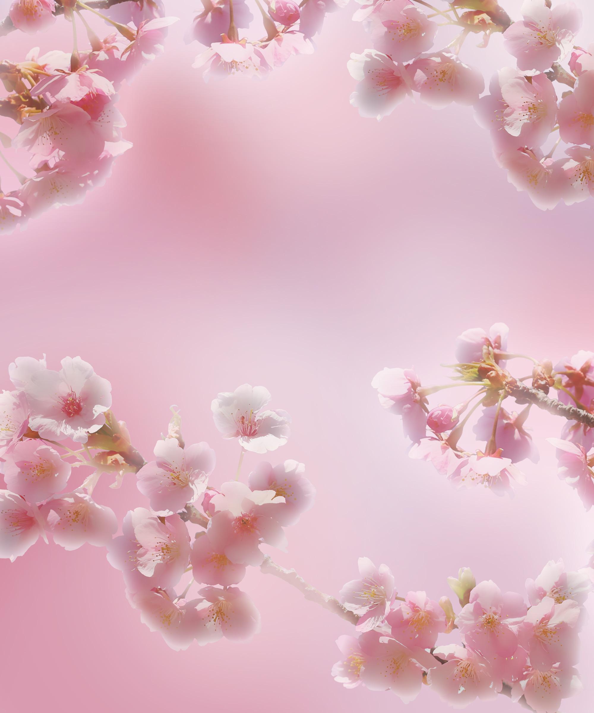 ピンク 背景 素材 フリー