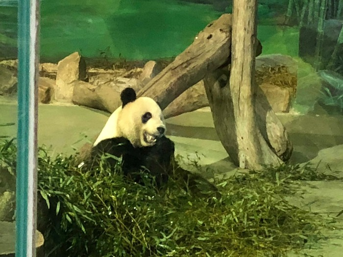 台湾旅行記・パンダ