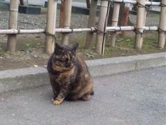 鷲宮神社駐車場・たぬ