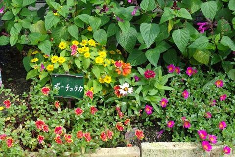 花壇撮影-2