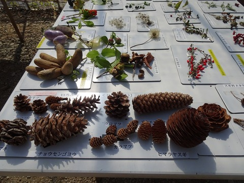 木の実草の実展示DSC03373