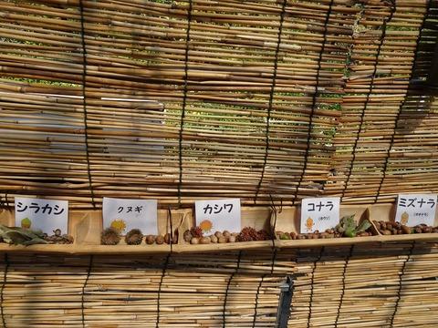 木の実草の実展示DSC03370