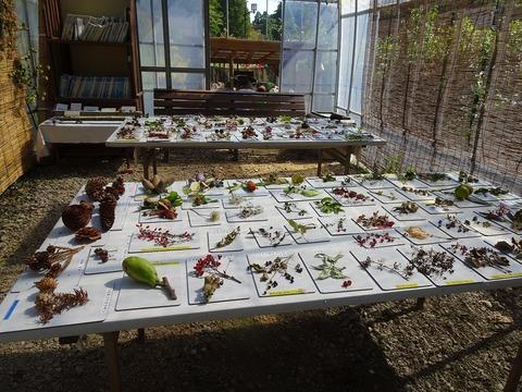 木の実草の実展示DSC03374