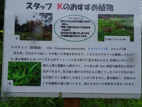 おすすめ植物DSC05193