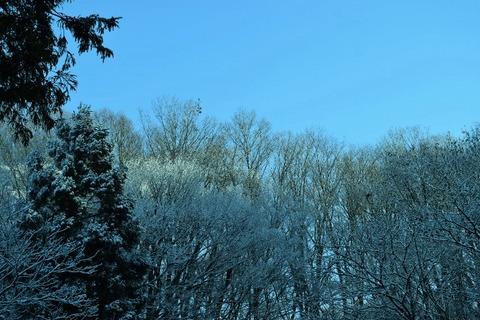 今シーズン初の雪景色