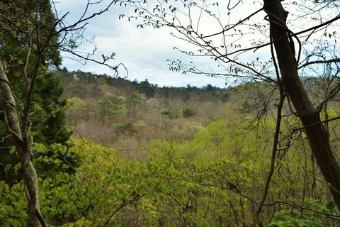 4月下旬_春の山