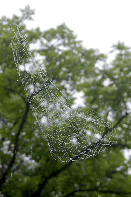 雨粒蜘蛛の巣①