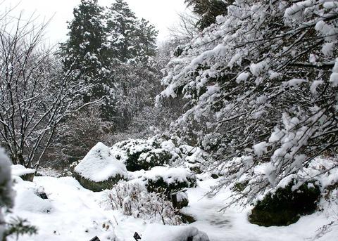 高山区雪景色②