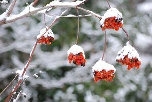 雪景色 (3)