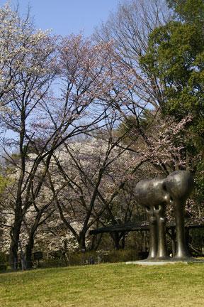 彫刻広場ヤマザクラ