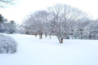 雪景色 (4)