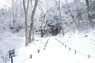雪景色 (6)