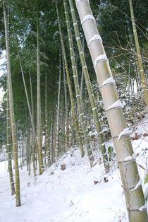 雪景色 (5)