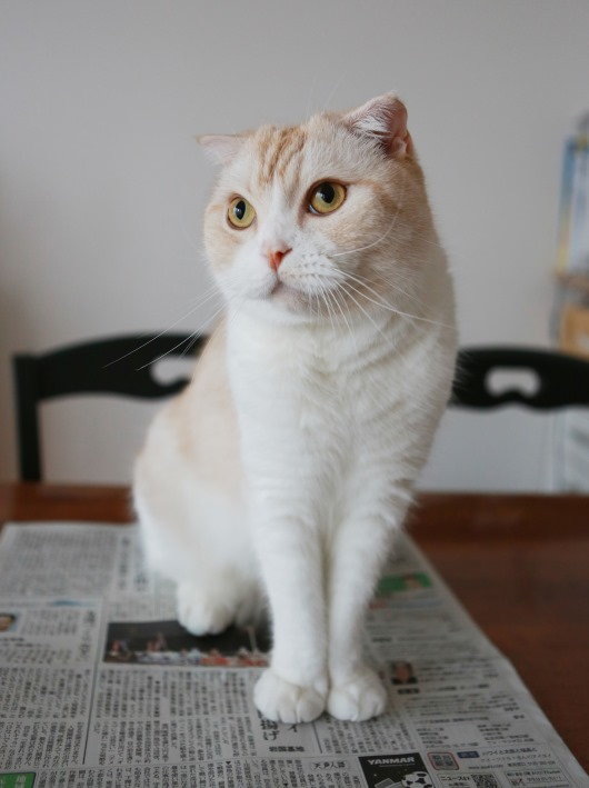 新聞は読ませませんよ。