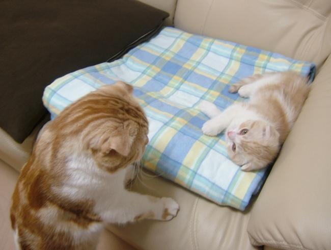 兄ちゃん、眠くなっちゃった。