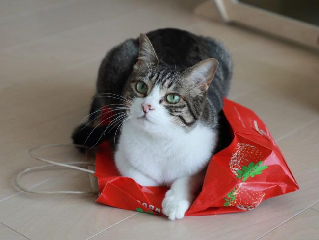 いちごの袋。