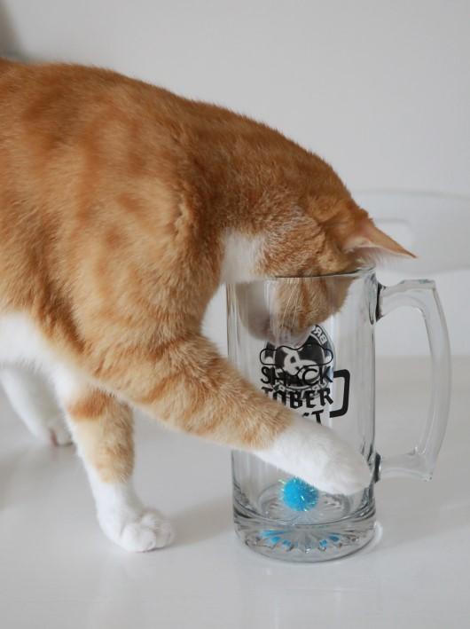 ビアマグとボールと猫らのチョイチョイ。