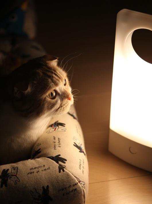 停電の夜のあっくん。