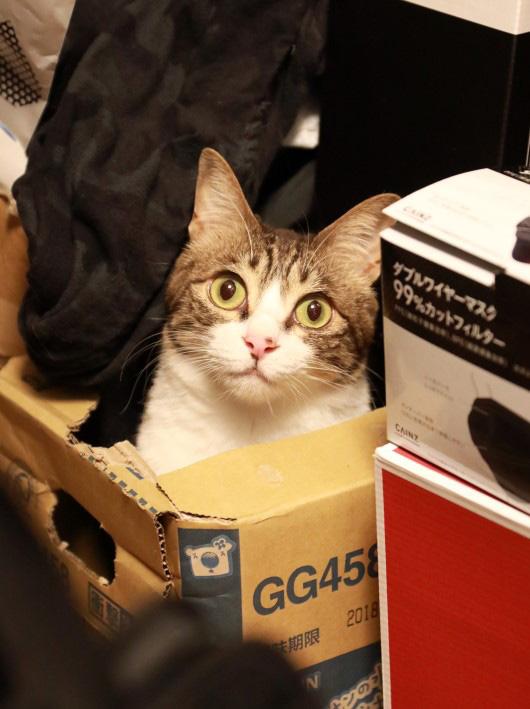 アミ、この箱もらいたい。
