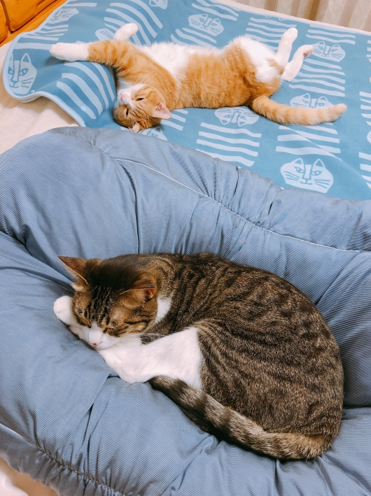 ベッドはボクのもの。