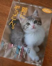猫にぞっこん。