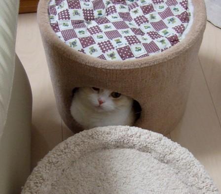 隠れてるの?