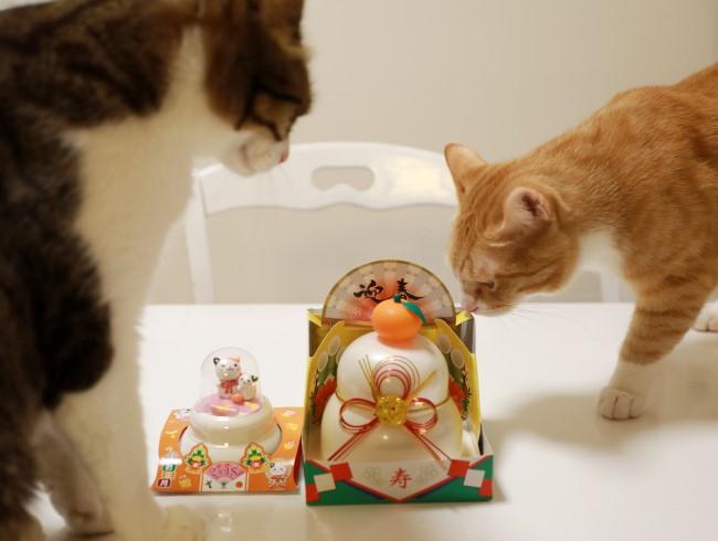 猫らの恒例行事。
