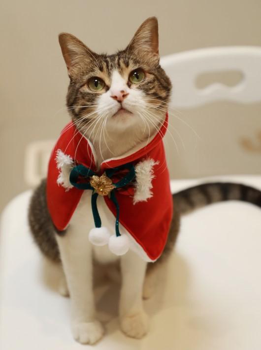 クリスマスのマント。
