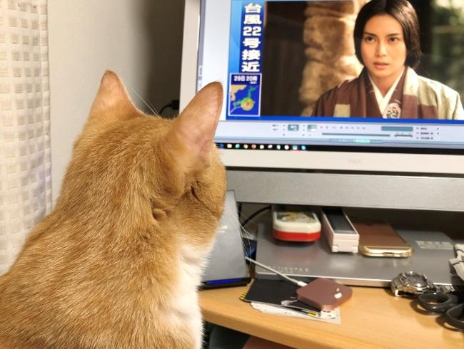 猫は時代劇がお好き?