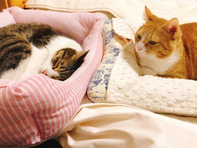 姐さん、起きないかなぁ。
