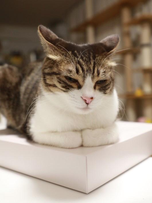 この箱はアミのもの。