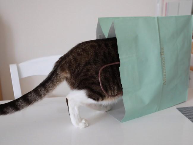 袋いただき。