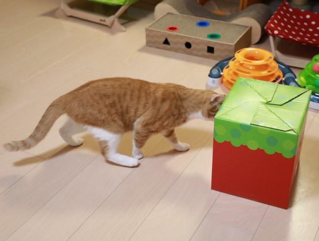 箱を運ぶ猫。