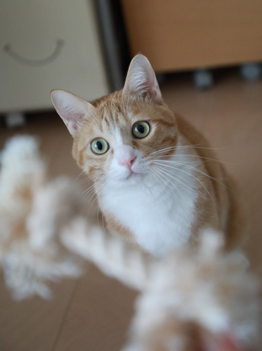 犬化する猫。